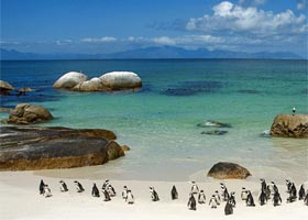 Itinerary-GRP-SA-12D9N-Boulder-Beach-penguins