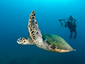 Mozambique-Scuba-diving---Wilderness-Safaris---Rocktail