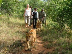 Zimbabwe-Walk-with-lions